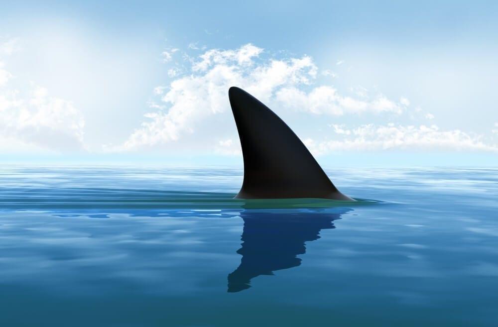 Hunt sharks during your Monster Hunt