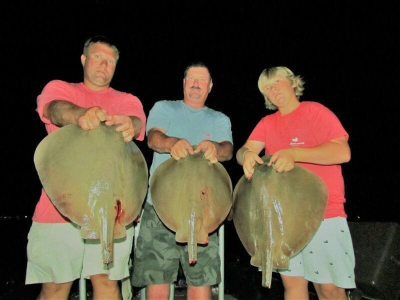3 Monster Stingray