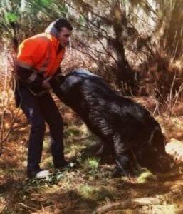Tackling Wild Hog