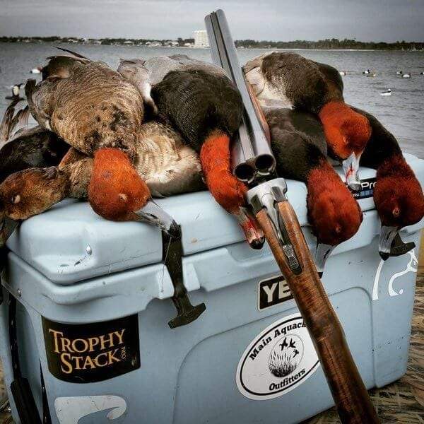 Harvested Ducks on Cooler