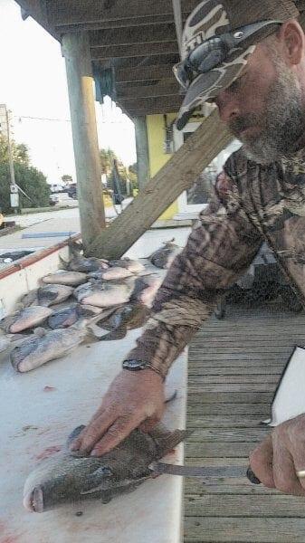 Cutting Triggerfish