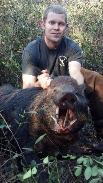 Wild Hog Showing its Tusks