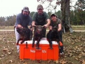 Three Men with Hogs