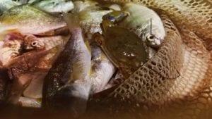 Family Shrimping Trip Biodiverse Dip Net Haul