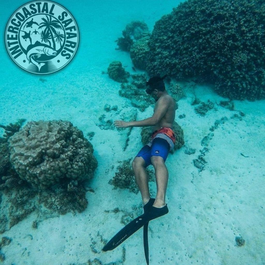 Spearfishing & Scuba Diving 2