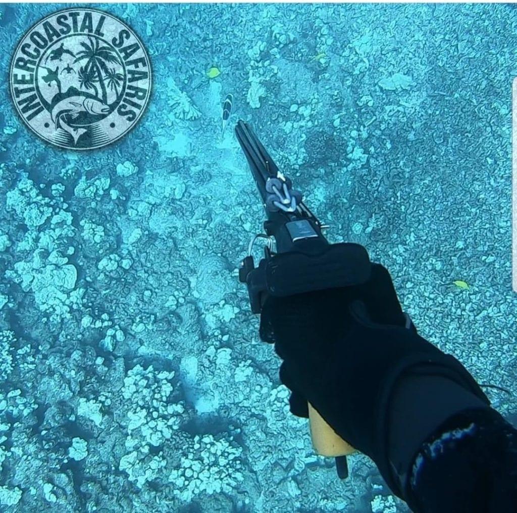 Spearfishing & Scuba Diving 4