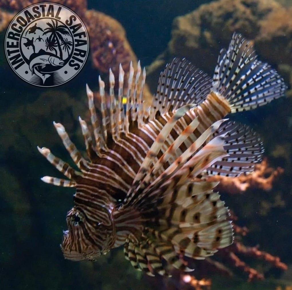 Spearfishing & Scuba Diving 7