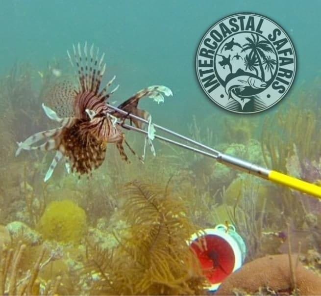 Spearfishing & Scuba Diving 8