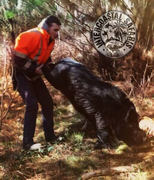 Hog & Coyote Hunt 18