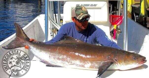 Inshore & Nearshore Fishing 26