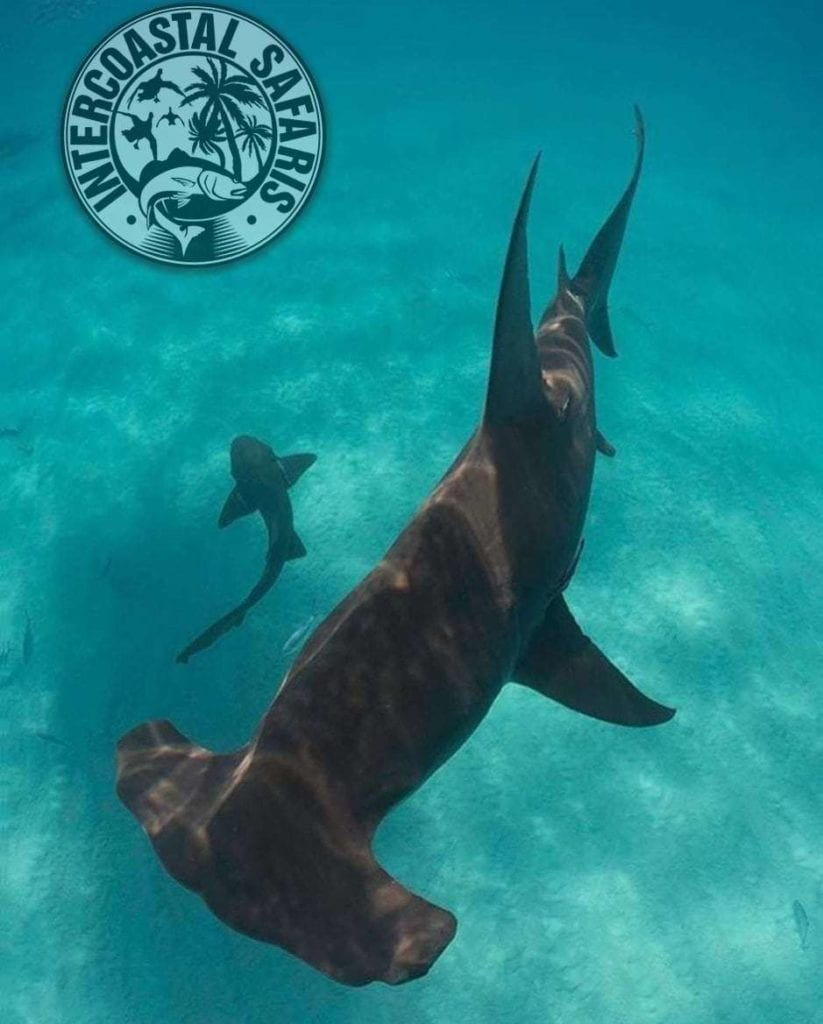 Spearfishing & Scuba Diving 13