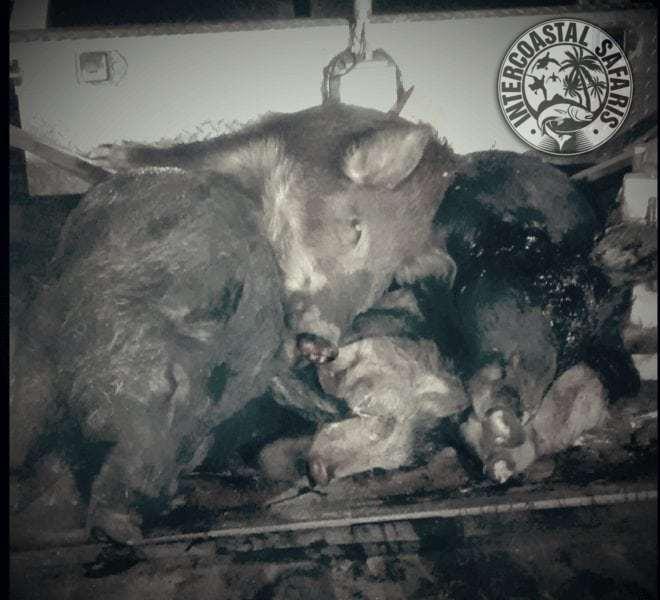 Hog & Coyote Hunt 23