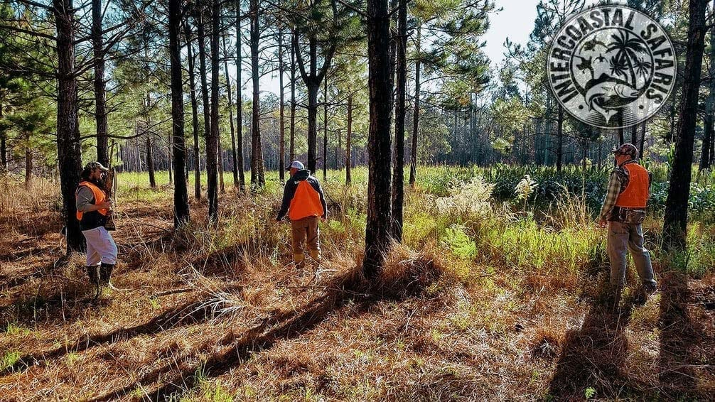South Alabama Quail Hunting 7