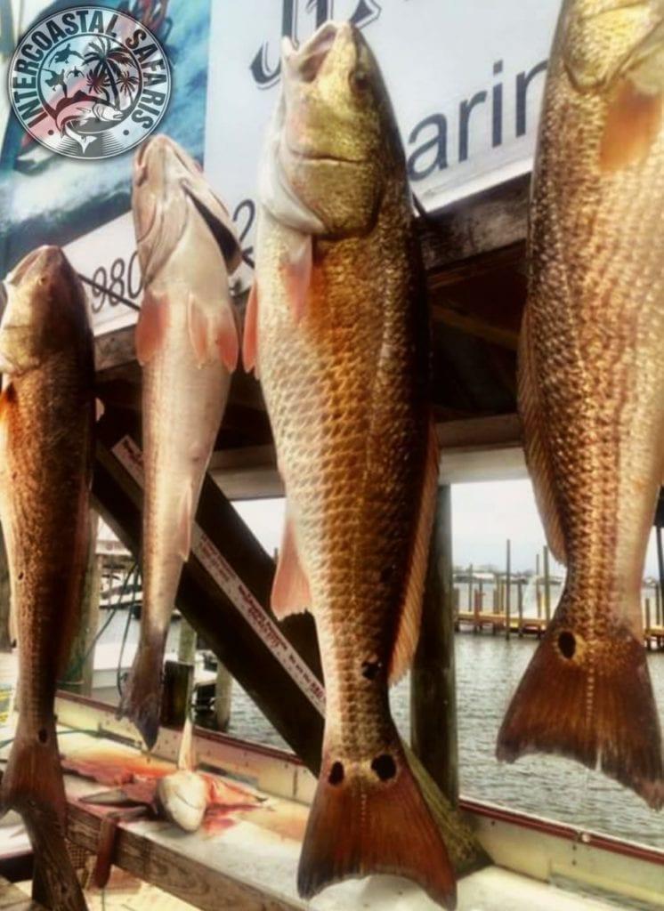 Inshore & Nearshore Fishing 48