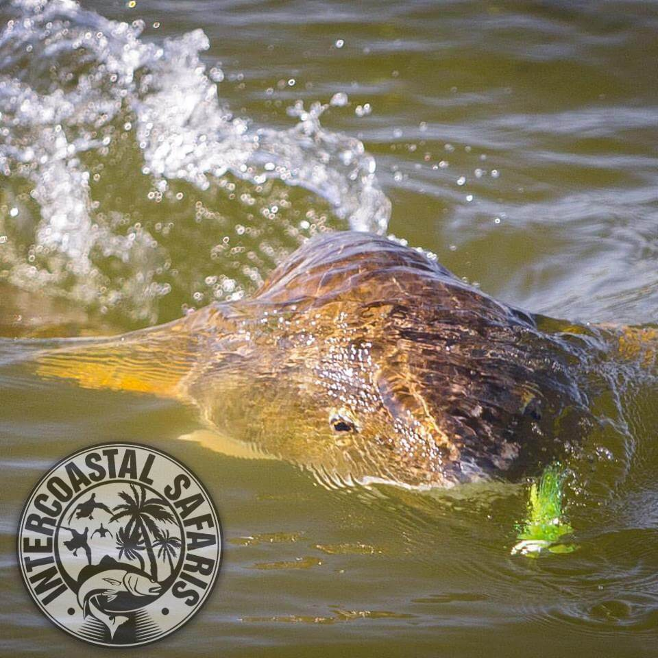 Saltwater Fly Fishing 14