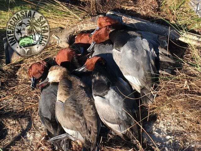 Coastal Duck Hunting 8