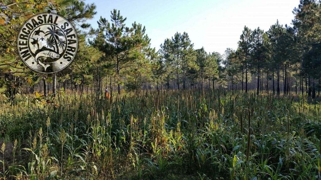 South Alabama Quail Hunting 6