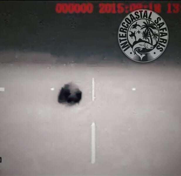 Hog & Coyote Hunt 27