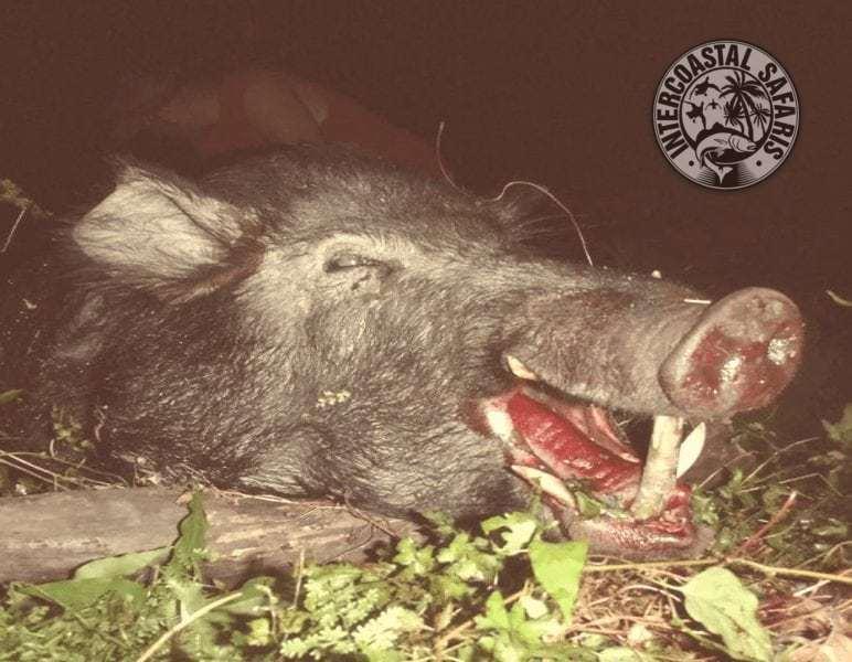 Hog & Coyote Hunt 28