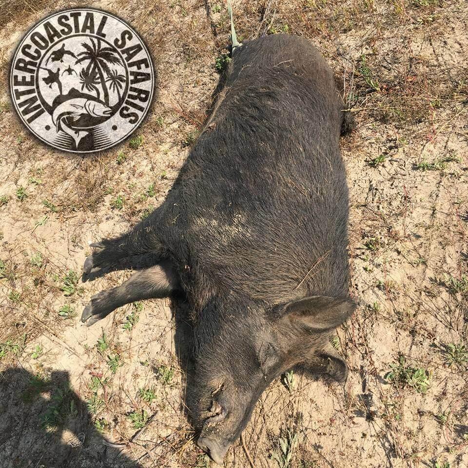 Hog & Coyote Hunt 29
