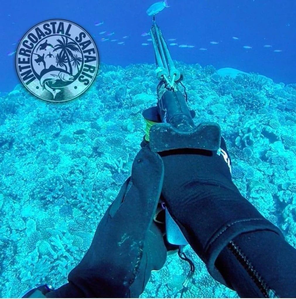 Spearfishing & Scuba Diving 16