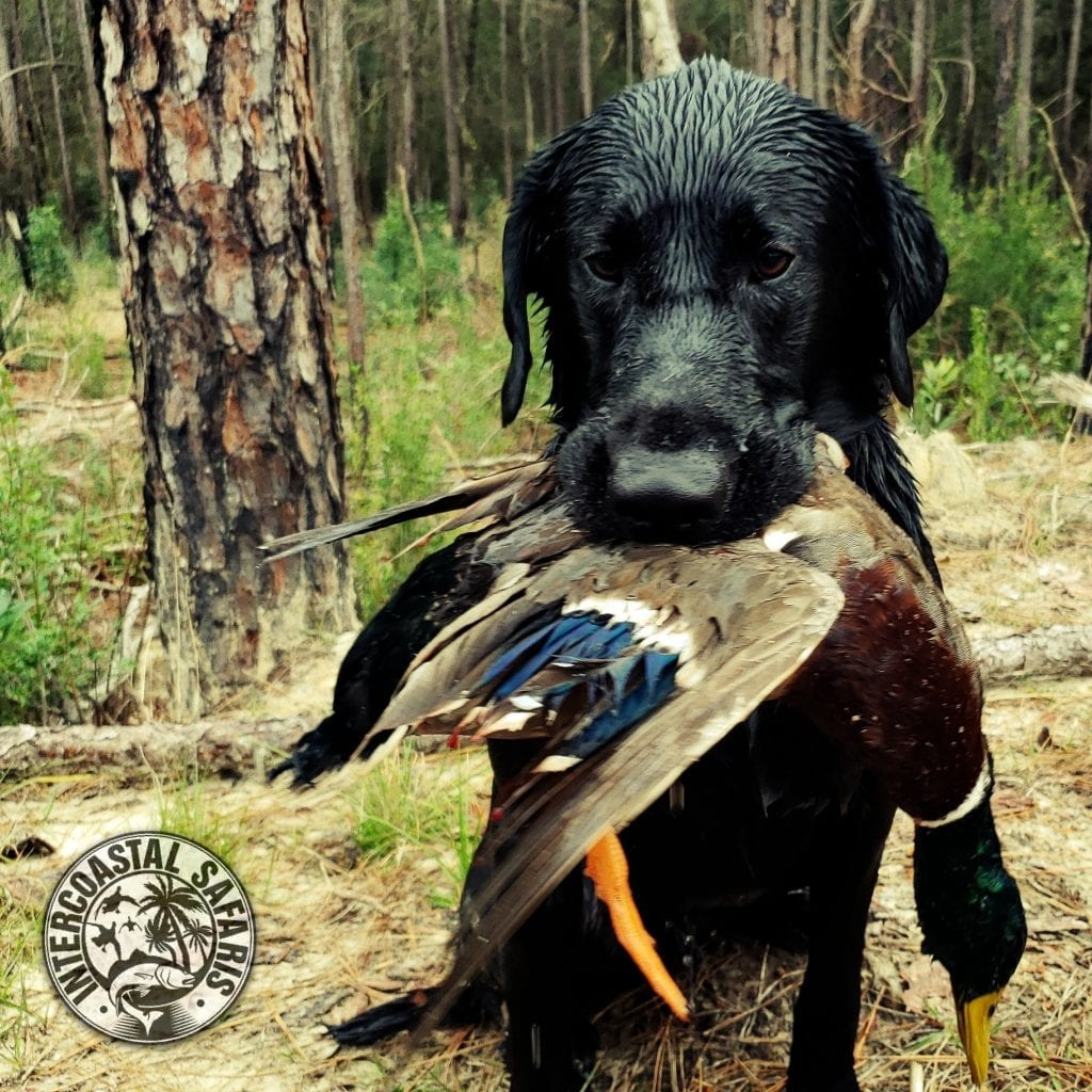Mallard Preserve Duck Hunt