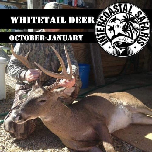 Alabama Blackbelt Whitetail (Currently Unavailable)
