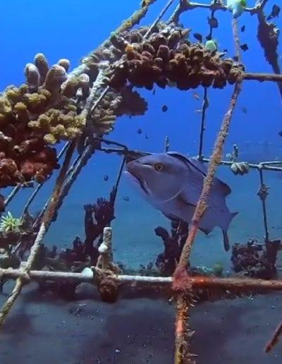 spearfishing gulf shores