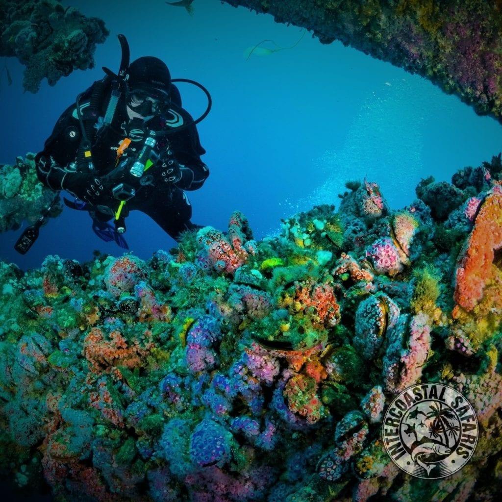 Alabama Artificial Reefs