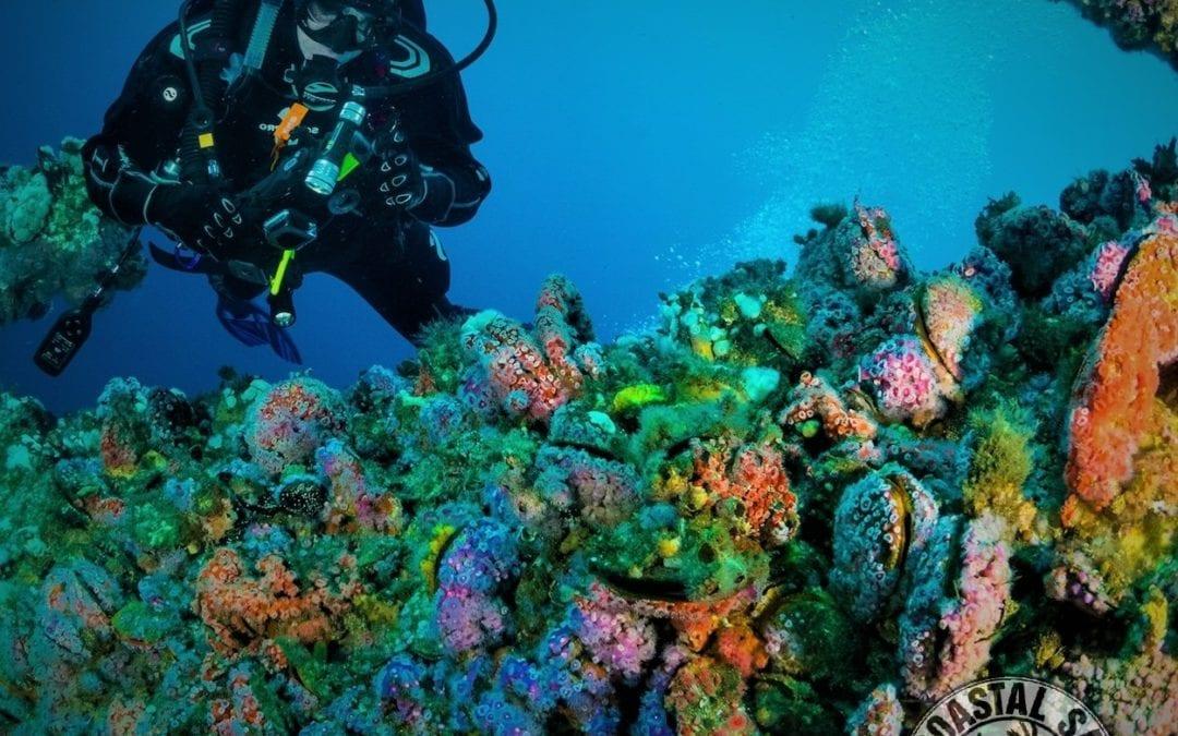 Artifical Reefs | Alabama Gulf Coast